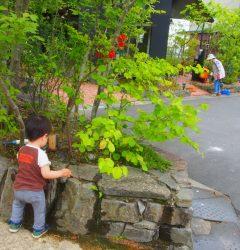 雑木 住人の春の剪定